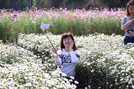 Diem chup anh voi vuon cuc hoa mi no ro tuyet dep o Ha Noi - Anh 4
