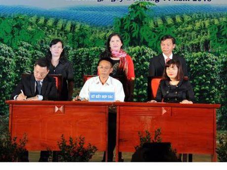 VietABank danh 500 ty dong ho tro nguoi dan Dak Nong trong ho tieu - Anh 1