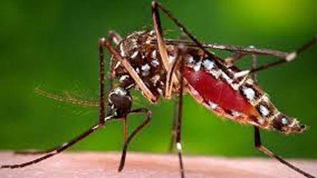 TPHCM: Them 2 quan huyen moi ghi nhan ca nhiem Zika - Anh 1