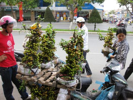 Cay canh gia lai xuat hien dip can Tet - Anh 1