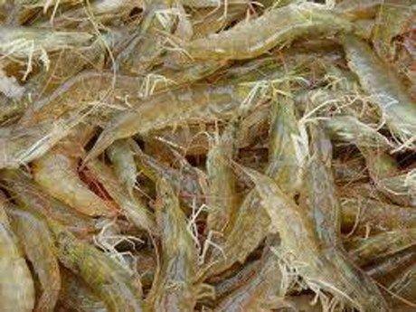 San luong thuy san khai thac va nuoi trong tang khoang 2% trong 11 thang - Anh 1