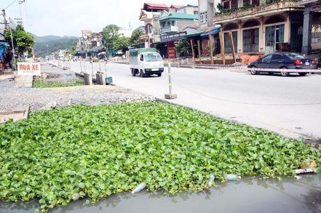 Quang Ninh: Can xem xet lai viec boi thuong cho 41 ho dan - Anh 1