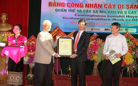 Nghe An cong nhan quan the sa mu dau, phay sung la cay di san Viet Nam - Anh 1