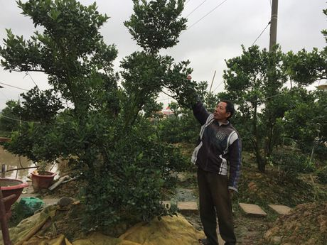 Hai Phong: Nhon nhip lang hoa chuan bi vao mua - Anh 1