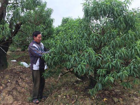 Hai Phong: Nhon nhip lang hoa chuan bi vao mua - Anh 2