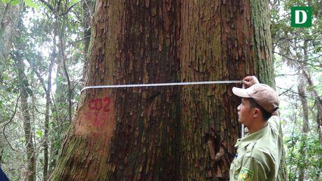 Chiem nguong quan the sa mu dau lon nhat Viet Nam - Anh 10