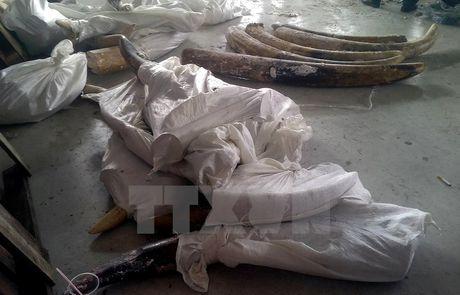 TP.HCM phat hien 529 kg nga voi giau tinh vi trong cac khuc go - Anh 1