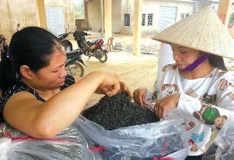 Doc dao nhung phien cho tra Thai Nguyen - Anh 1