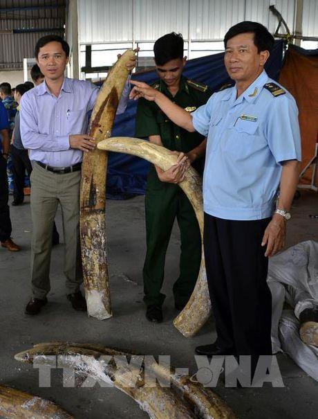 Tp. Ho Chi Minh phat hien 529 kg nga voi giau tinh vi trong cac khuc go - Anh 2
