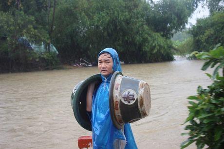 Nha vuon Nhon An ngup lan trong dong nuoc lu cuu nhung chau mai tet - Anh 5