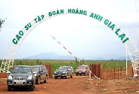 Nhung dai gia Viet lan san sang linh vuc nong nghiep - Anh 5