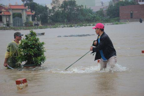 'Thu phu' mai vang vat va chay lu - Anh 3
