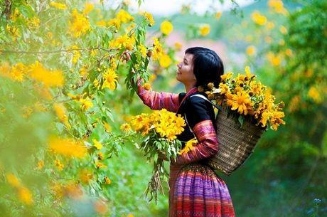 Thang 12 ru nhau len cao nguyen Moc Chau san hoa da quy bung no - Anh 6