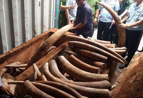 TP. HCM lan thu 7 trong 3 thang phat hien nga voi - Anh 1
