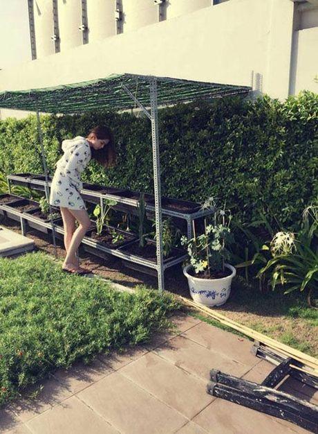 Nhung vuon rau xanh mat nhin la me cua sao Viet - Anh 14