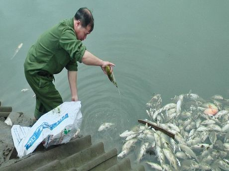 """Lao Cai: """"Bong dung"""" ca chet hang loat va gan 200 ha hoa mau bi tap la? - Anh 1"""