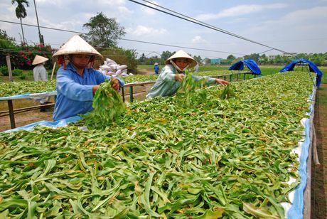 3 dinh huong phat trien nganh duoc lieu Viet Nam - Anh 1