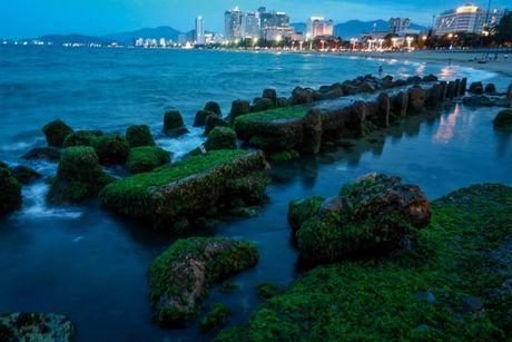 Ngan ngo ngam reu xanh ben bo vinh Nha Trang - Anh 11