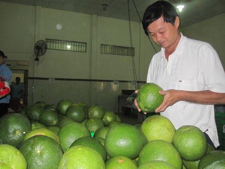 Thuong lai Trung Quoc lai do tro khi mua buoi - Anh 1