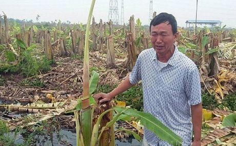 Cong an Hai Phong len tieng vu giam doc doanh nghiep thue con do chem hang nghin cay chuoi - Anh 3