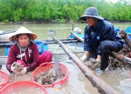 Hang loat hau chet chua ro nguyen nhan o Dat Mui, Ca Mau - Anh 1