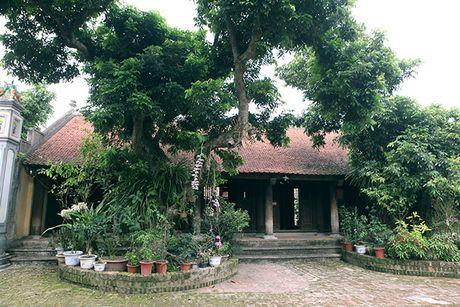 Ngam 'ao                                                          thu, ngo truc'                                                          trong chum tho                                                          Thu cua Nguyen                                                          Khuyen - Anh                                                          4