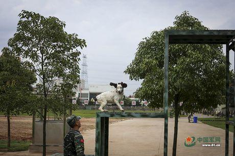 Ngam xem canh sat Trung Quoc huan luyen cho nghiep vu - Anh 11