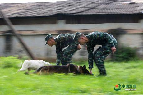 Ngam xem canh sat Trung Quoc huan luyen cho nghiep vu - Anh 3
