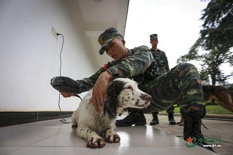 Ngam xem canh sat Trung Quoc huan luyen cho nghiep vu - Anh 8