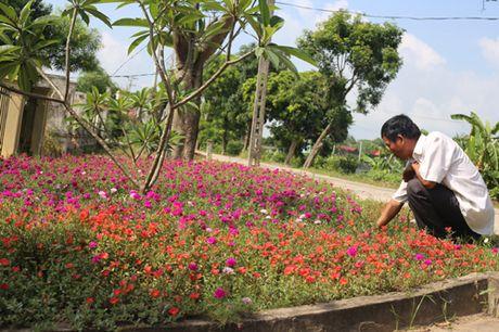 Ruc ro sac hoa Nam Trieu - Anh 1