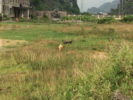 Ninh Binh: Nha may xi mang Phu Son gia nghin ti nam 'chet' gan 10 nam - Anh 2
