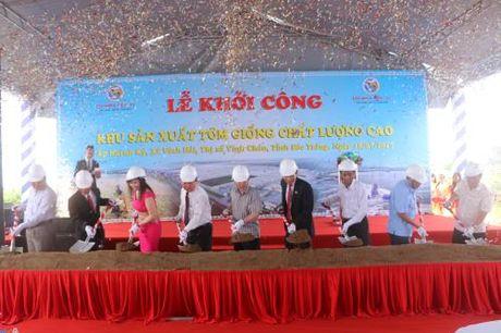 Soc Trang: Lan dau tien co khu san xuat tom giong chat luong cao - Anh 1