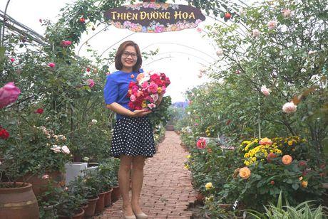 'Thien duong' hoa hong giua long Ha Noi - bo suu tap vo gia - Anh 2