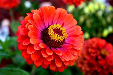 Chiem nguong ve dep cua hoa co be lo lem - Anh 10