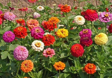 Chiem nguong ve dep cua hoa co be lo lem - Anh 11