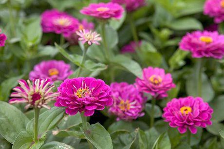 Chiem nguong ve dep cua hoa co be lo lem - Anh 12