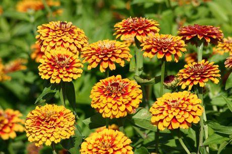 Chiem nguong ve dep cua hoa co be lo lem - Anh 1