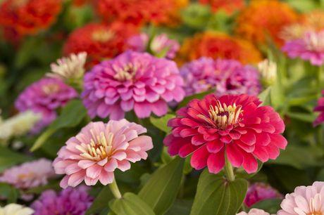 Chiem nguong ve dep cua hoa co be lo lem - Anh 4