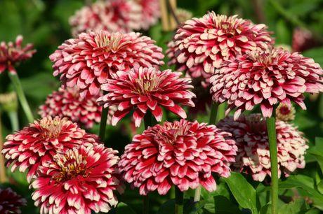 Chiem nguong ve dep cua hoa co be lo lem - Anh 5