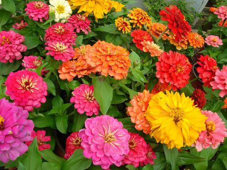 Chiem nguong ve dep cua hoa co be lo lem - Anh 8