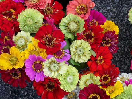 Chiem nguong ve dep cua hoa co be lo lem - Anh 9