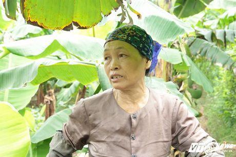 Chuoi mat ca mua lan gia, dan Khoai Chau nhu ngoi tren lua - Anh 6