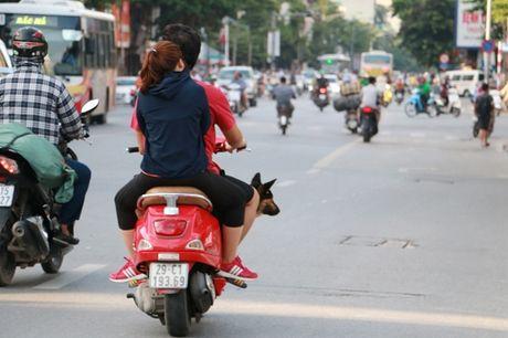 Nguoi dan Ha Noi van phot lo, vo tu tha rong cho tai noi cong cong - Anh 10