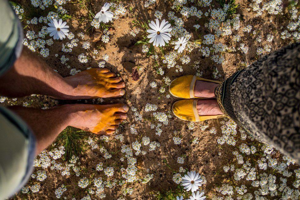 Ngẩn ngơ trước cảnh biển hoa phủ kín hoang mạc ở Nam Phi Ảnh 8
