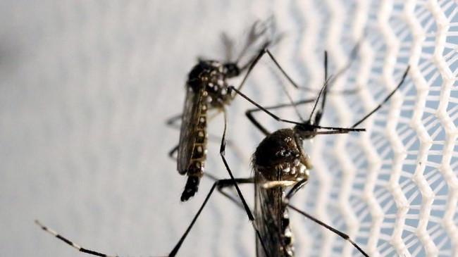 Dùng trí tuệ nhân tạo diệt muỗi gây bệnh Ảnh 1