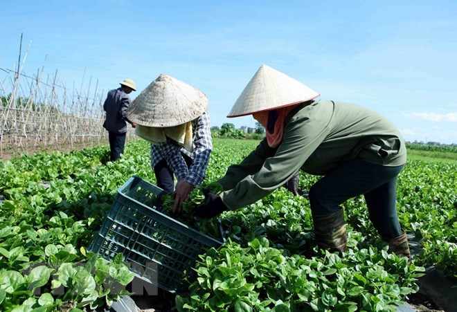 TCVN: 'Đòn bẩy' đưa sản phẩm nông nghiệp hữu cơ vào đời sống Ảnh 1