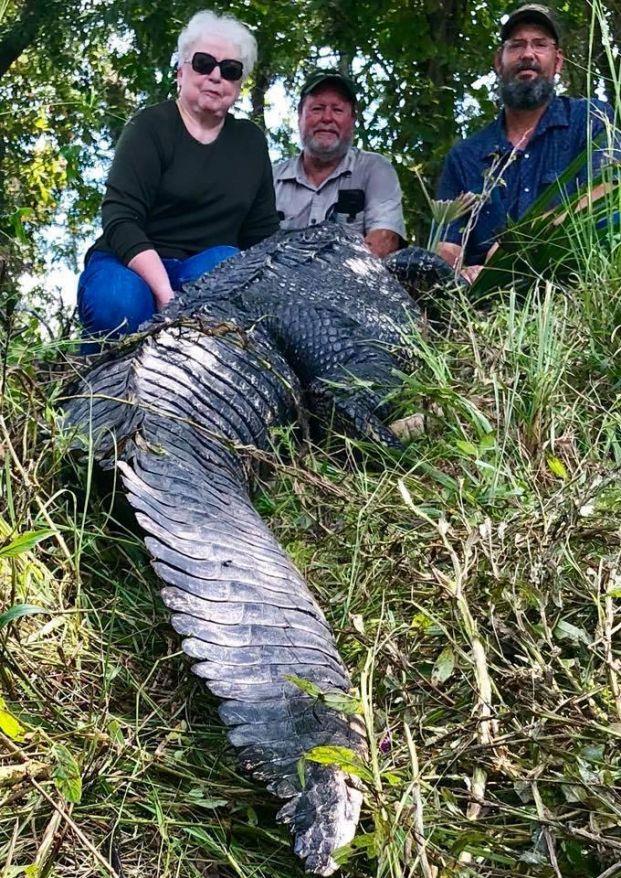 Cụ bà bắn chết cá sấu dài 3,6 mét vì dám ăn trộm thú cưng của gia đình Ảnh 4