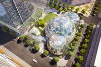 Amazon xây dựng công viên trong nhà cho nhân viên