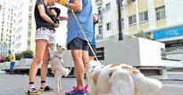 Con chó làm khó dân Sài Gòn