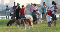 Người dân Hà Nội vẫn phớt lờ, vô tư thả rông chó tại nơi công cộng